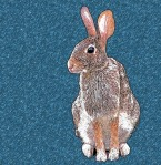 bunny bluestar